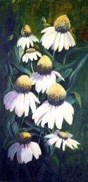 2002 Echinacea Alba