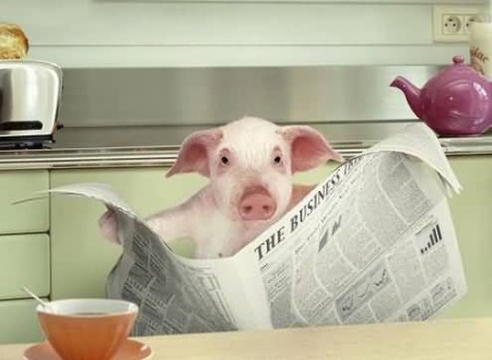funny-pig-reading-newspaper