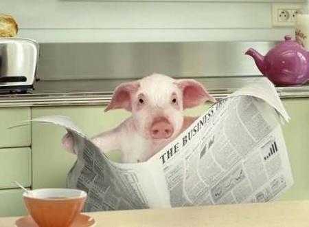 funny-pig-reading-newspaper