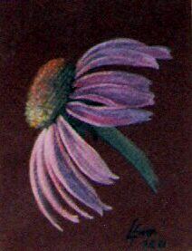 Cone flower (pastel,2001)