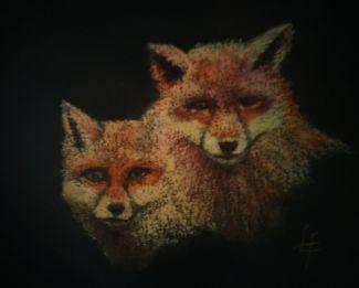 rec foxes
